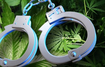 Keep secure and informed with a legal firm that knows the cannabis market.